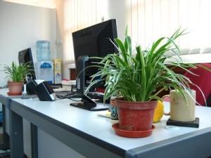 office-pics_00003